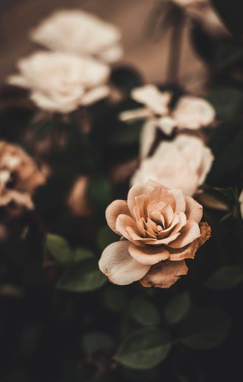 bloeien, bloeiend, bloemblaadjes