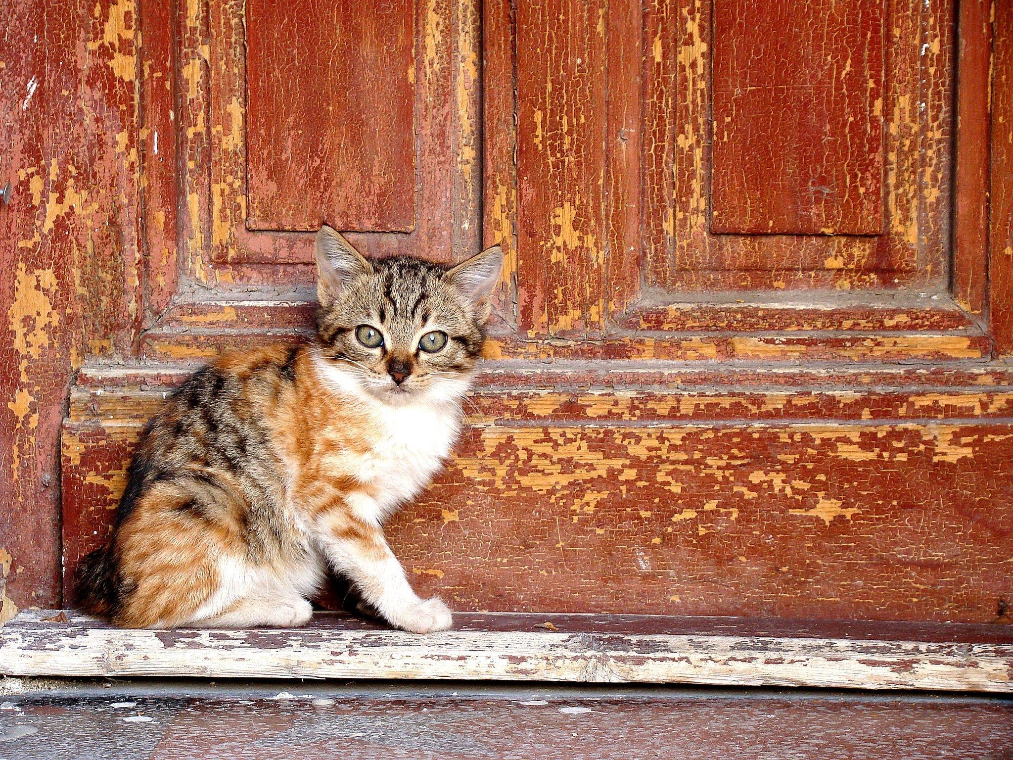 Orange Tabby Kitten Beside Brown Wooden Table