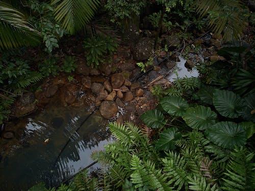 guadeloupe adaları doğa orman içeren Ücretsiz stok fotoğraf