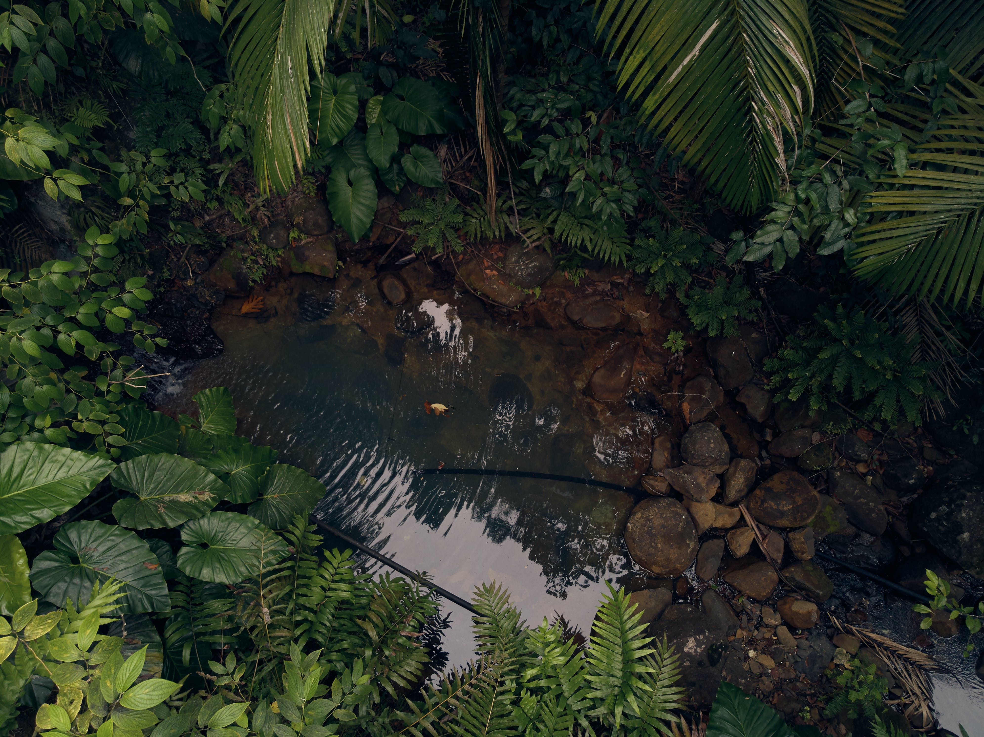 Guadeloupe islands Nature Forest Caribbean