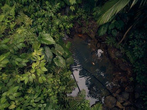 guadeloupe adaları doğa orman karayipler içeren Ücretsiz stok fotoğraf