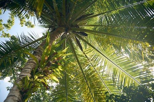 Základová fotografie zdarma na téma 4k tapeta, fotografie znízkého úhlu, HD tapeta, kokosová palma