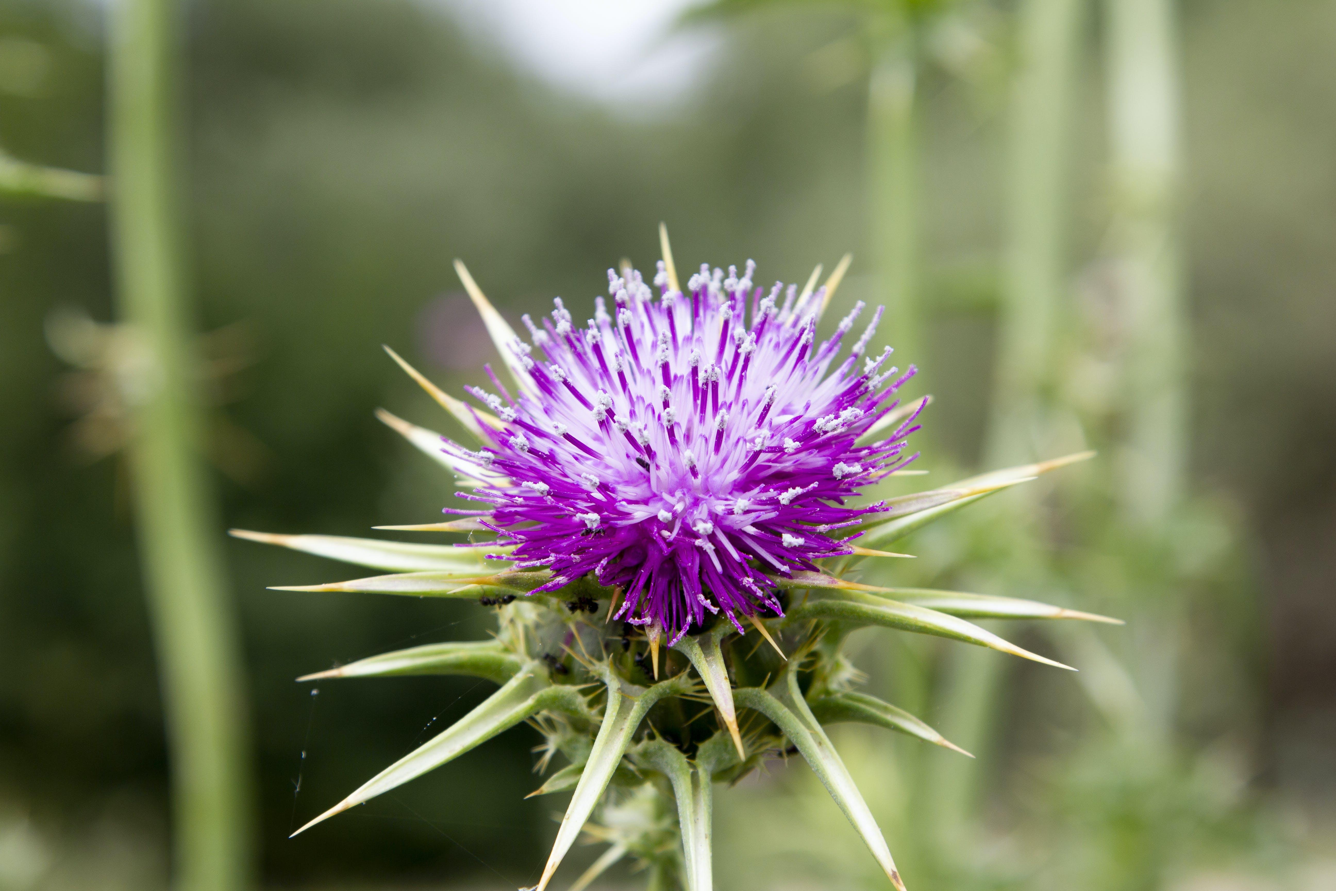 Free stock photo of Atardecer, flor, flores, naturaleza