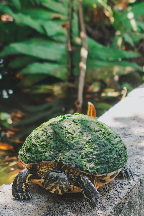 龟在壁架上的特写照片