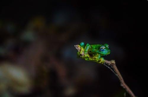 Gratis stockfoto met amfibie, beest, biologie, close-up