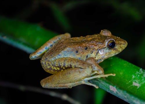 Foto d'estoc gratuïta de amfibi, animal, animal salvatge, biologia
