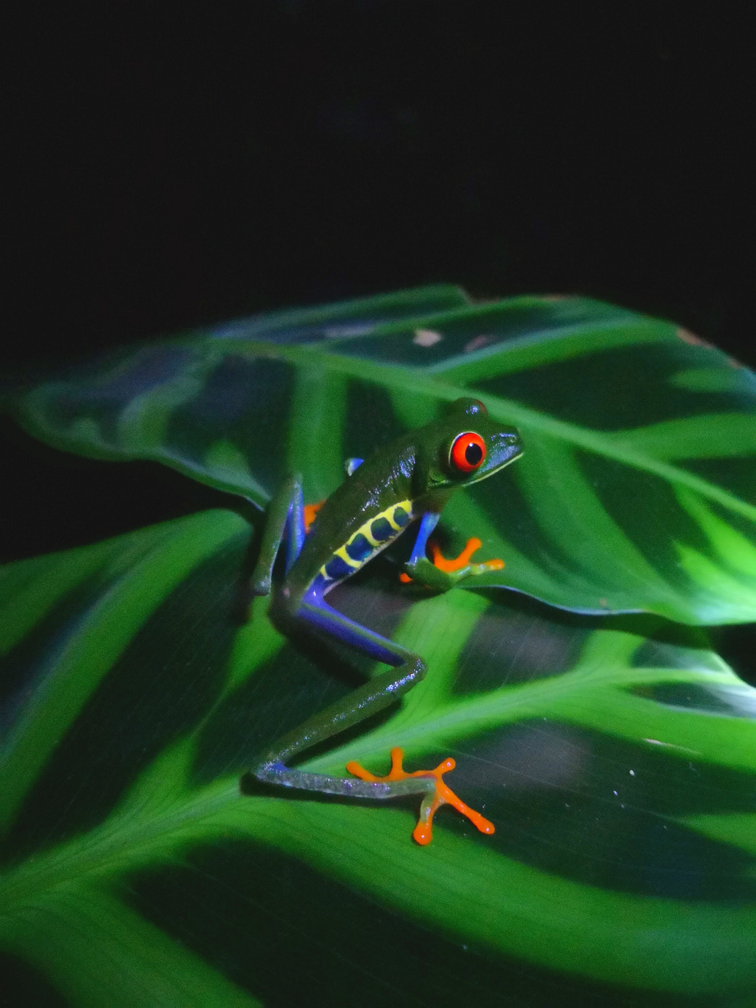 Close-Up Photo of Green Frog