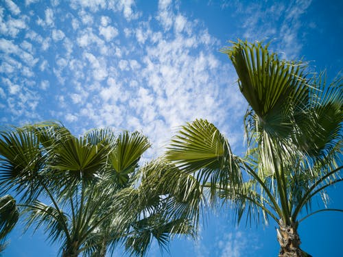 Palm Trees Under Blue Sky