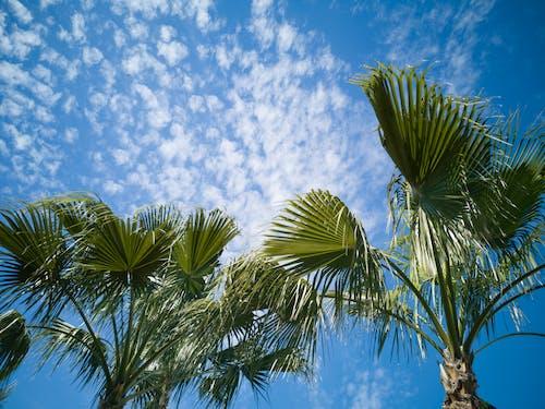 Ingyenes stockfotó alacsony szögű felvétel, alacsony szögű fényképezés, fák, felhők témában