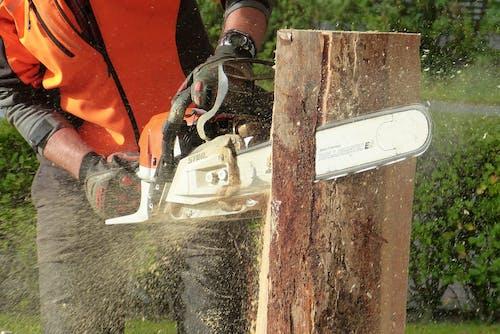Foto stok gratis batang pohon, debu, dewasa, gergaji