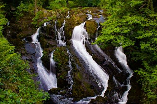 강, 개울, 녹색, 물의 무료 스톡 사진