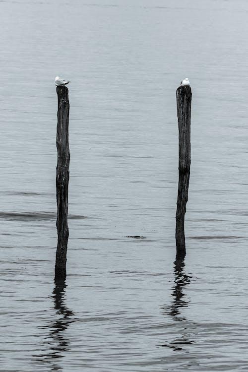 대조, 모노톤의, 모양, 물의 무료 스톡 사진