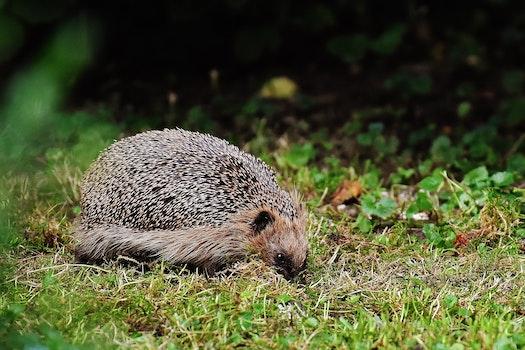 Free stock photo of nature, animal, cute, grass