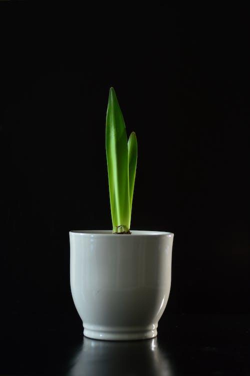 Darmowe zdjęcie z galerii z flora, martwa natura, roślina, roślina domowa