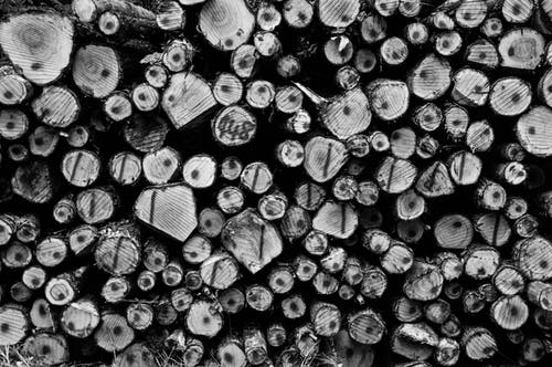 Бесплатное стоковое фото с биржа, бревна, бревно, дерево