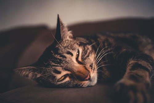 Základová fotografie zdarma na téma domácí mazlíček, fotografování zvířat, kočka, kočka domácí