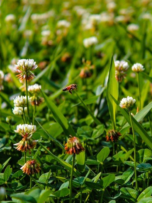 Ảnh lưu trữ miễn phí về chụp ảnh thiên nhiên, con ong, công viên tự nhiên, sân cỏ