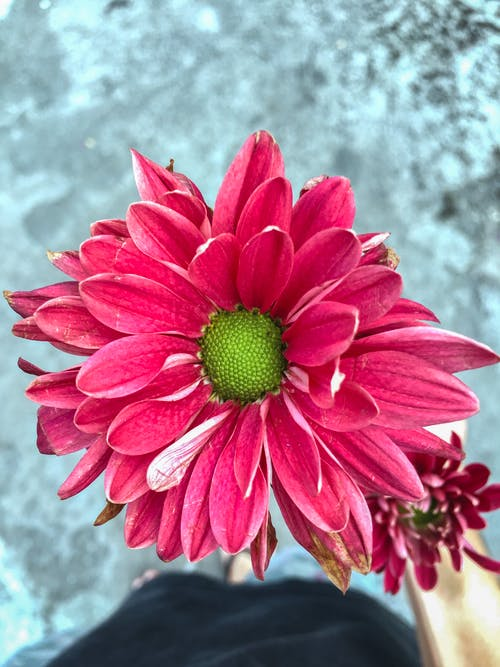 Ảnh lưu trữ miễn phí về hoa, hoa đẹp, Hồng