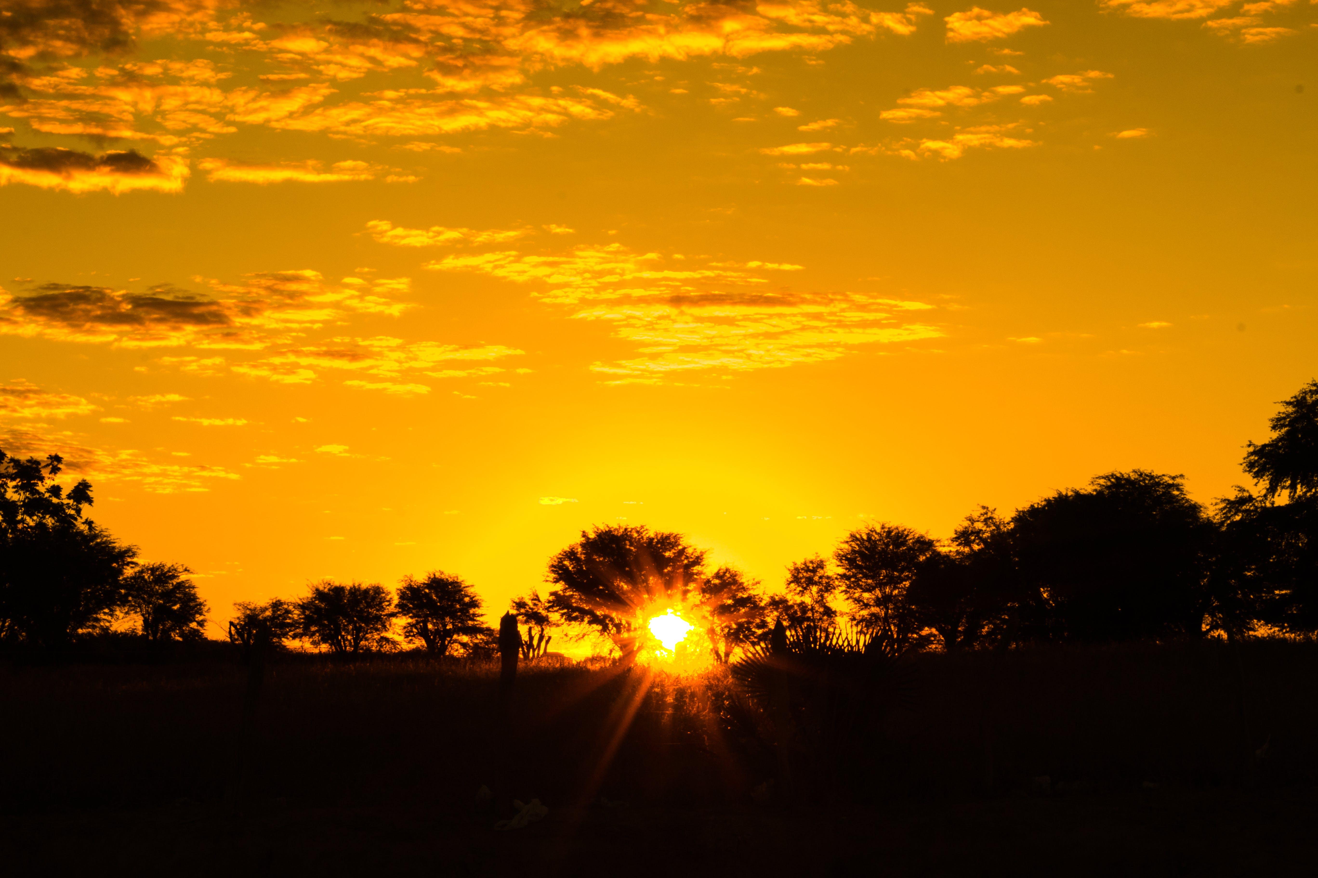 Free stock photo of #nature, evening sun, golden sun