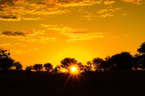 Darmowe zdjęcie z galerii z #natura, wieczorne słońce, złote słońce