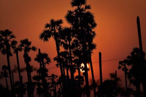 Free stock photo of india, summer, sunset