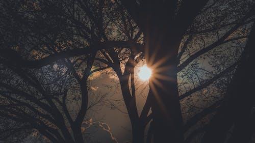 剪影, 太陽, 日出, 日落 的 免費圖庫相片