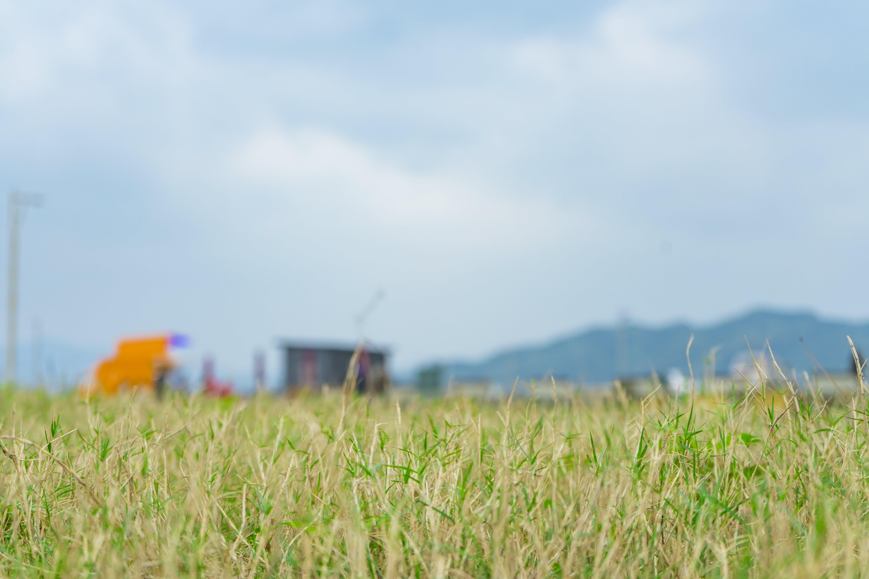 Kostenloses Stock Foto zu blau, draussen, frisch, gras