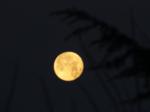 Бесплатное стоковое фото с ночь, полная луна, полночь, темный