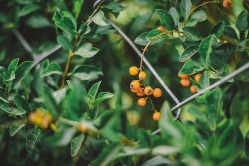 Fotos de stock gratuitas de arbusto, bokeh, flor