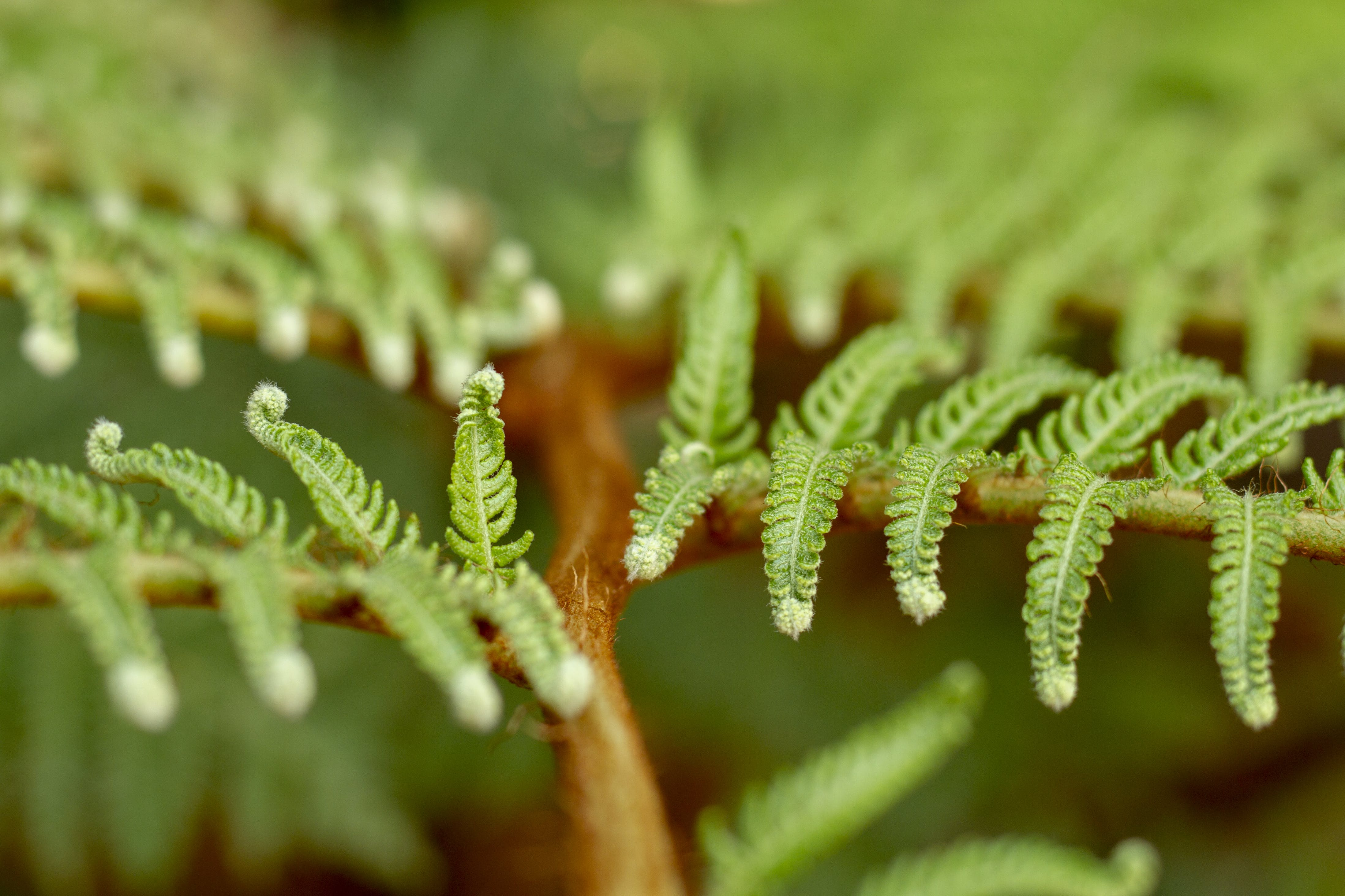Free stock photo of fern leaves, green leaves