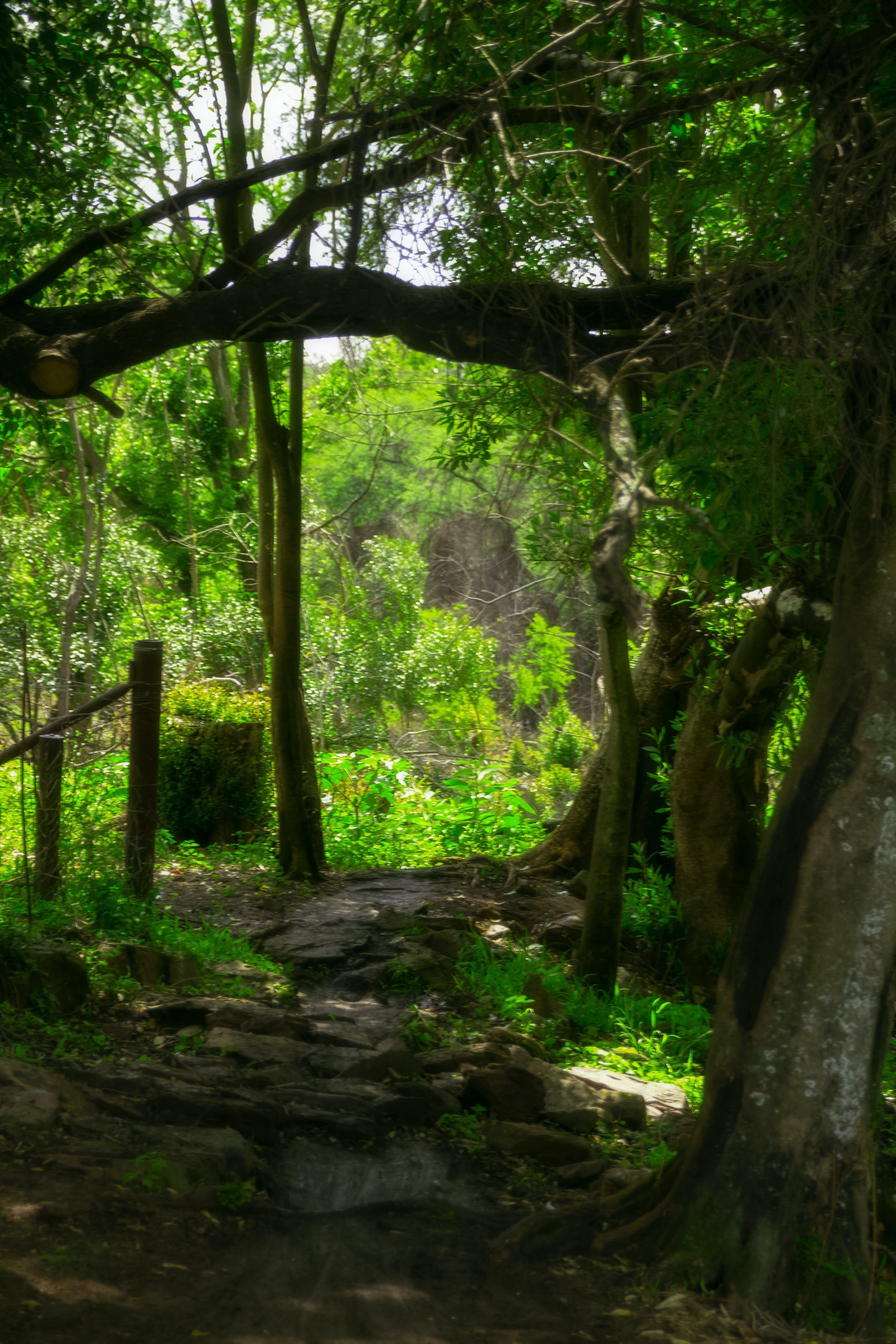 Free stock photo of scenic view, trees