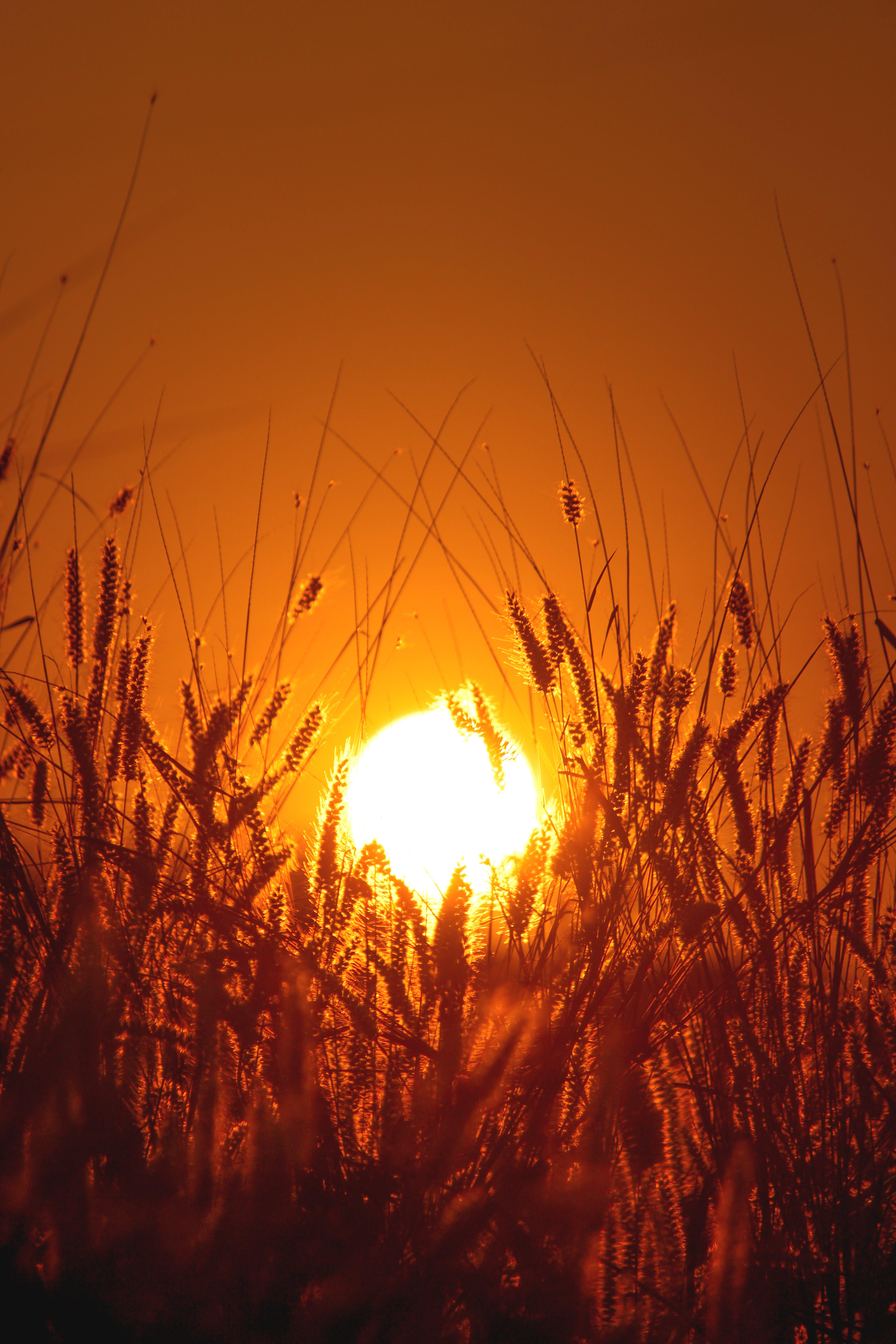 Ingyenes stockfotó Aranyló nap, aranyóra, aranysárga, barátian témában
