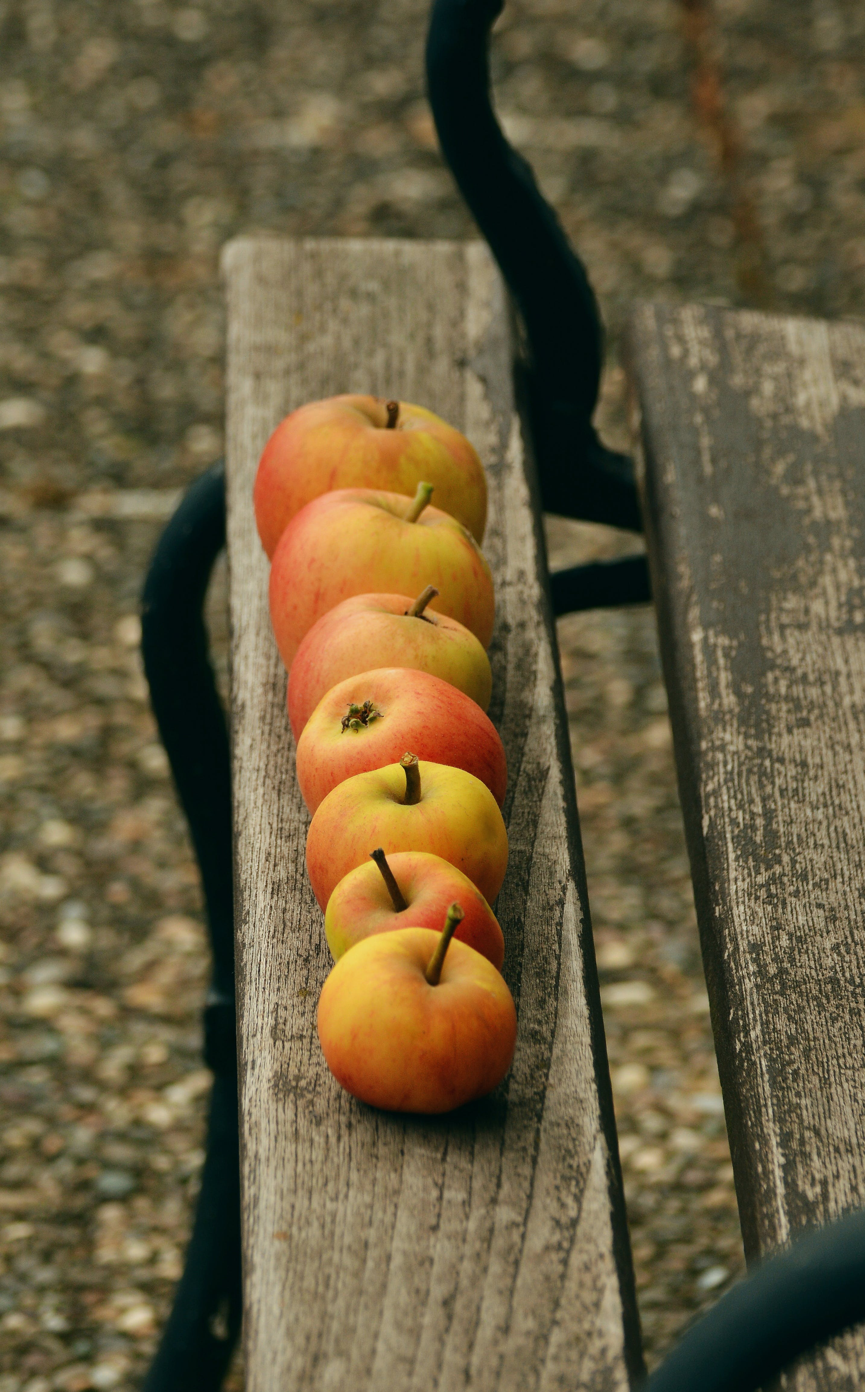 Free stock photo of healthy, red, apple, garden