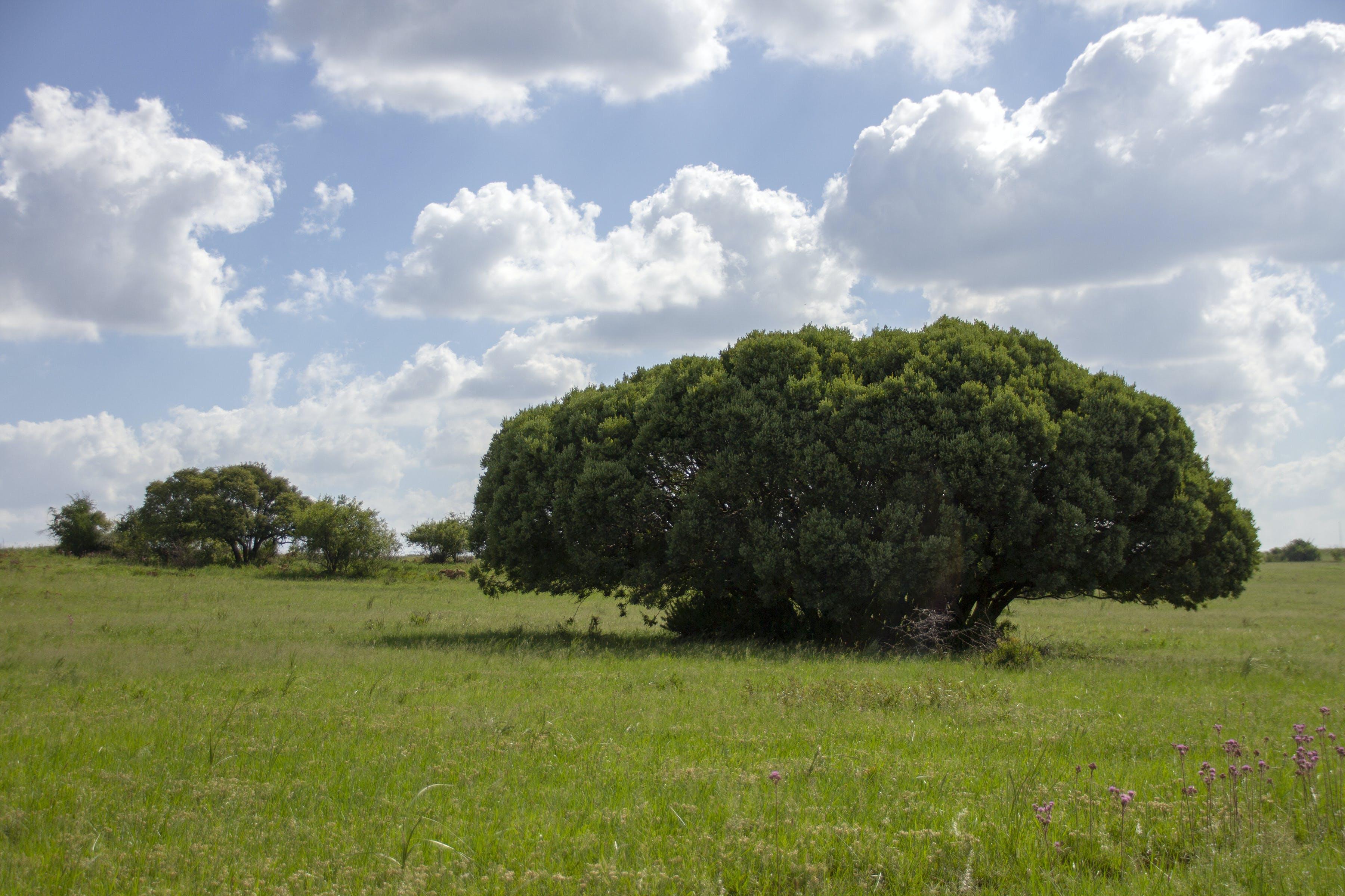 Free stock photo of tree]