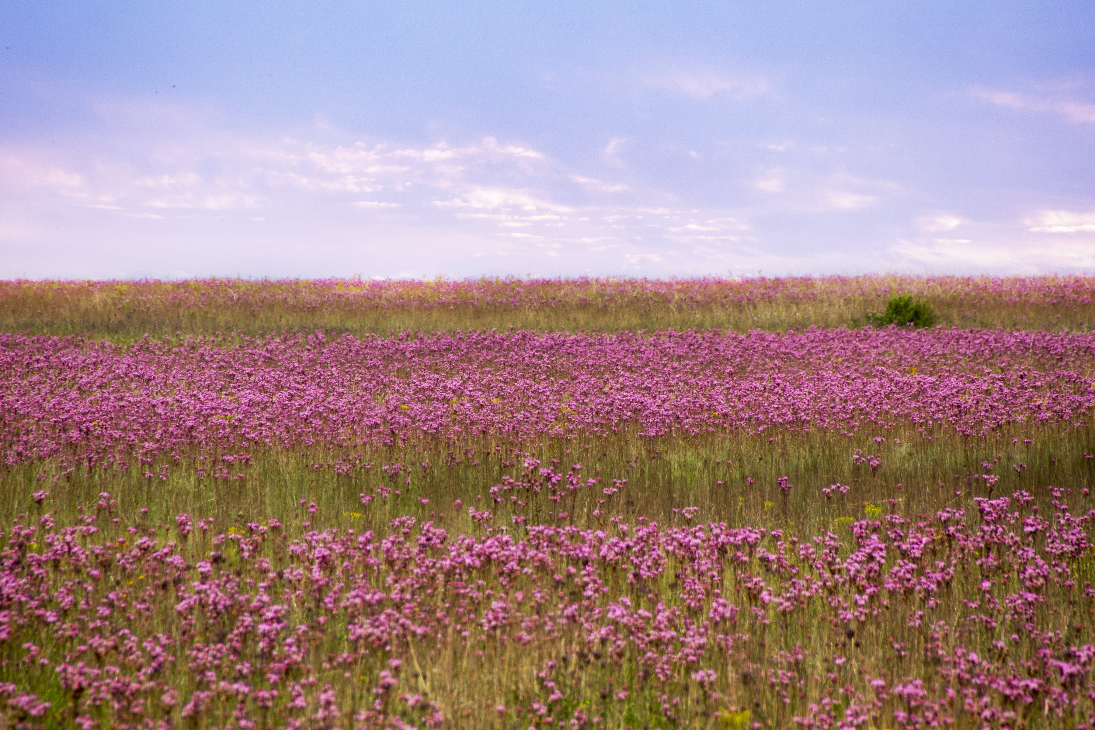 Free stock photo of field of flowers, flowers