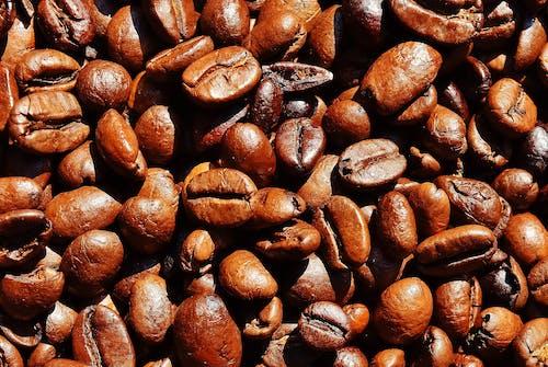Brown Coffee Bean