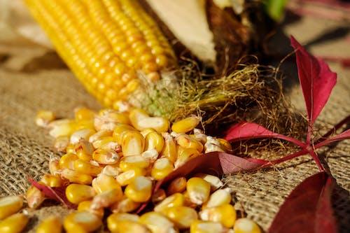 Бесплатное стоковое фото с еда, кукуруза, кукурузные зерна, снимок крупным планом