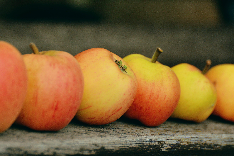 Free stock photo of apple, bank, fruit, garden