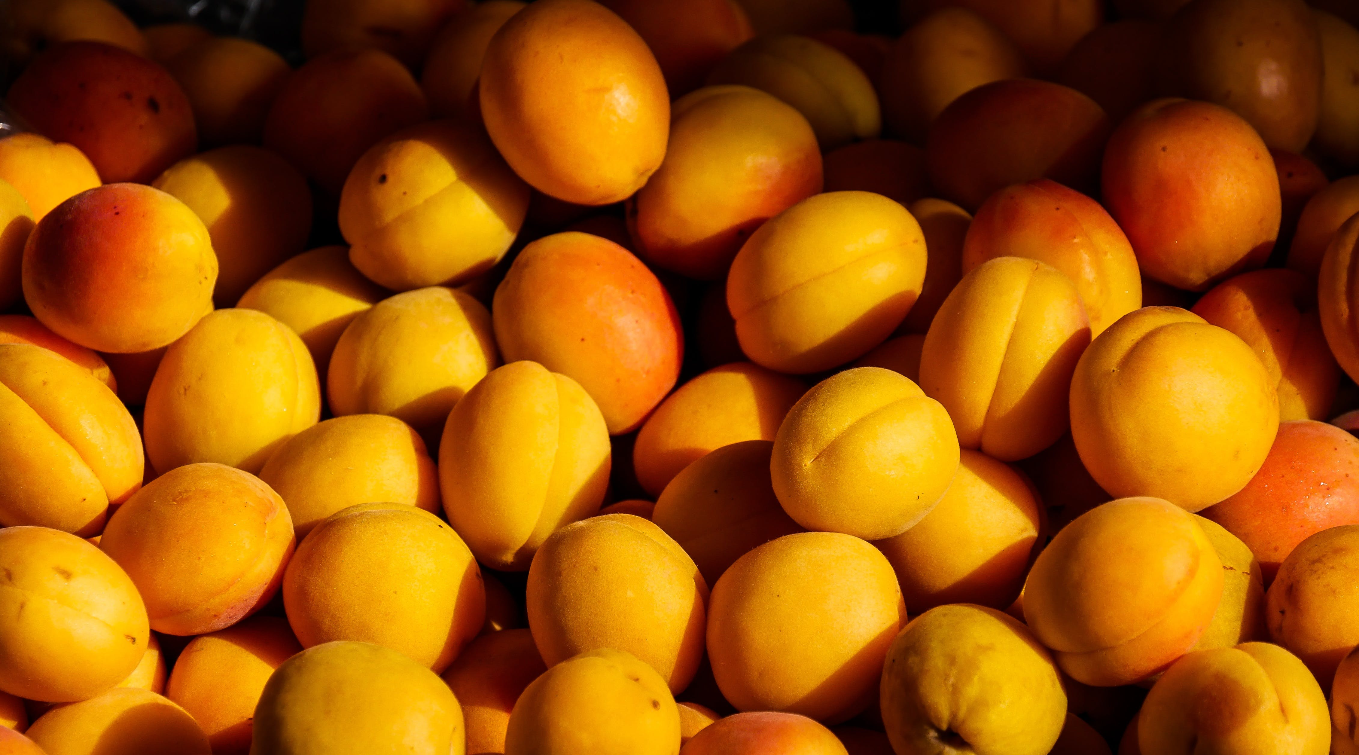 agriculture, apricot, color