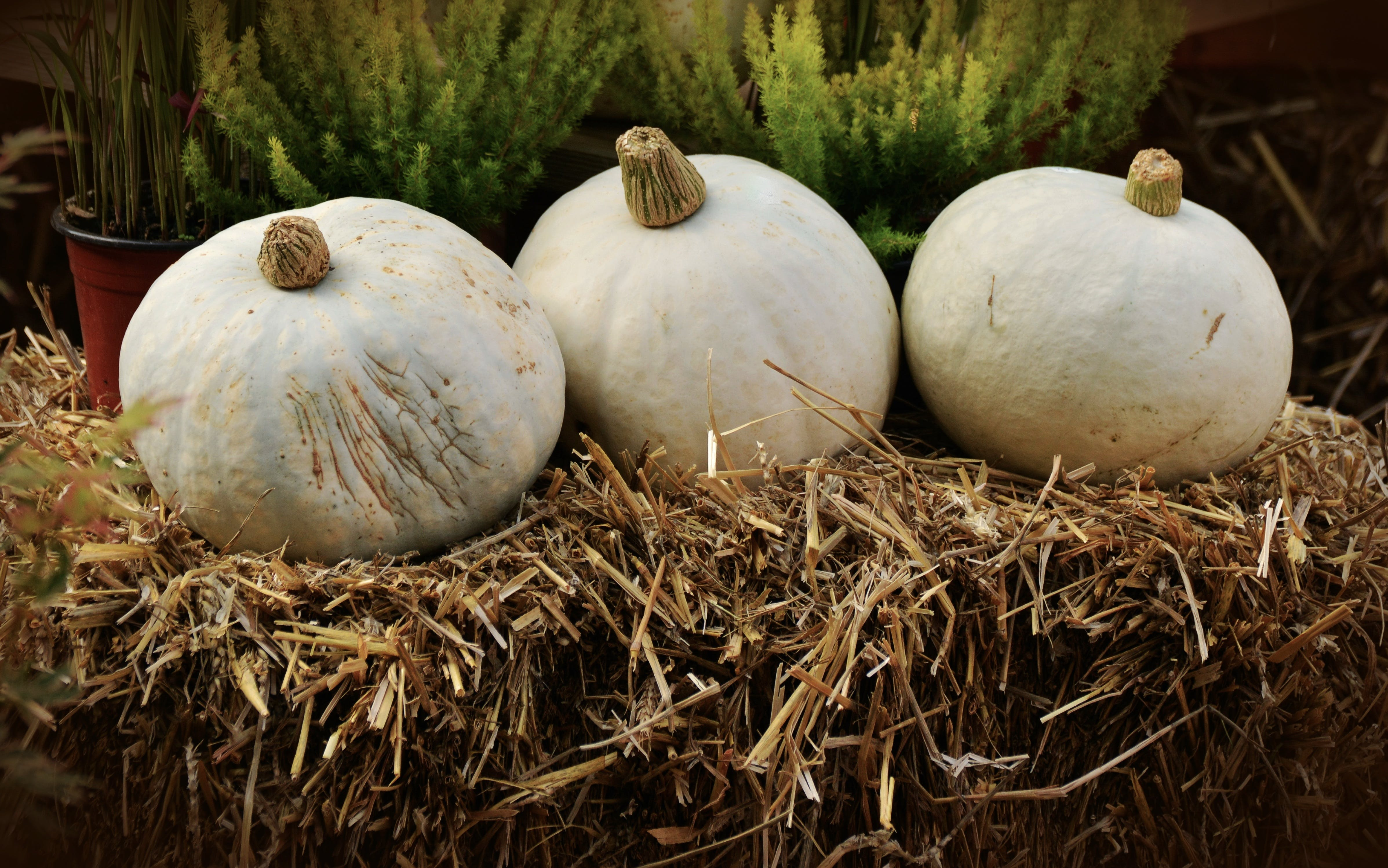 White Round Vegetable Piled on Hay Near Green Leaf Plant