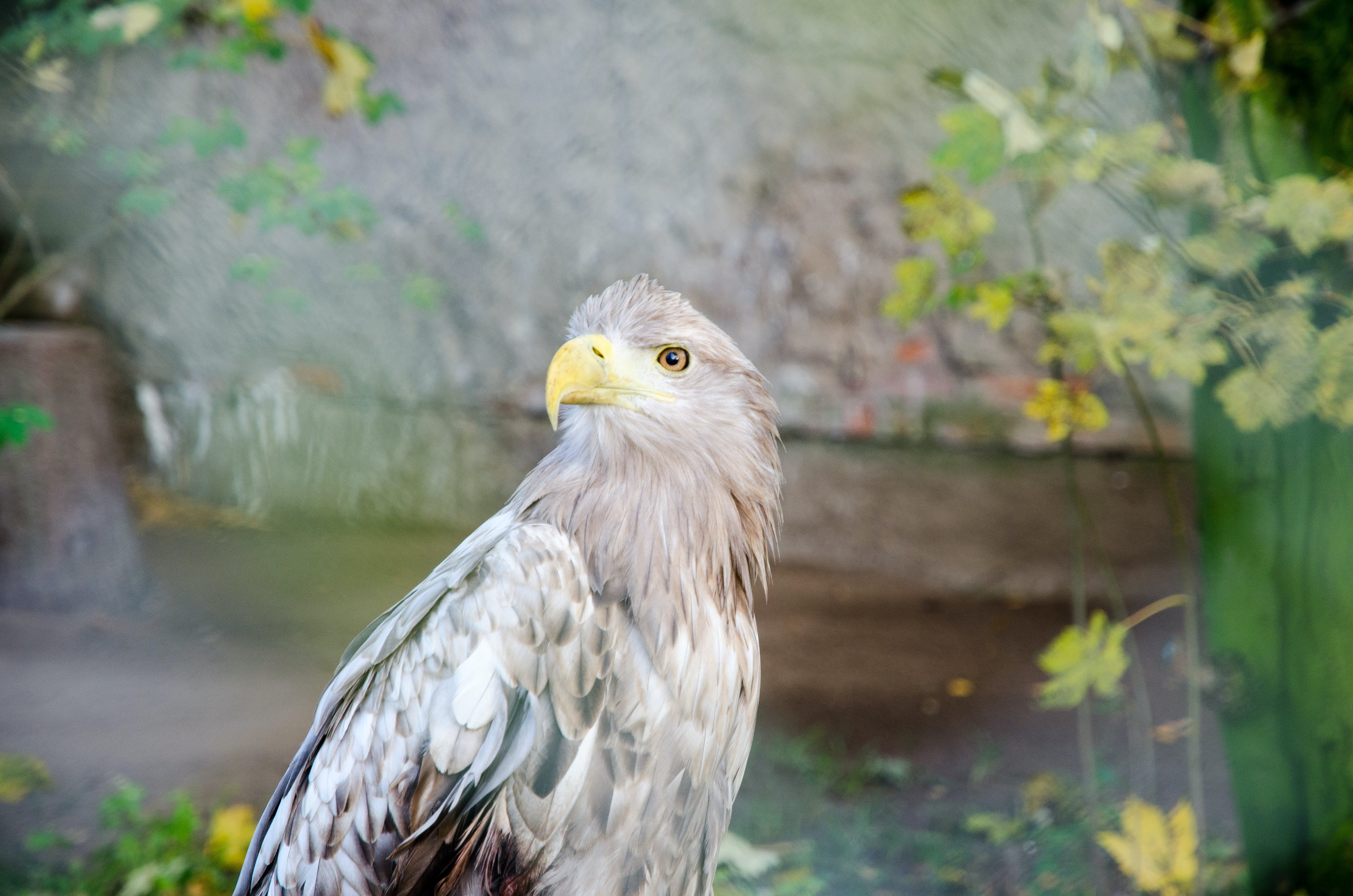 Selective Focus Photography of White and Gray Hawk