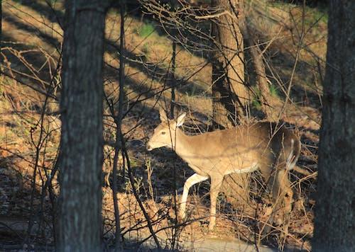 Základová fotografie zdarma na téma jelení přechod