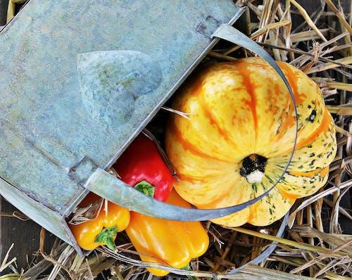 Imagine de stoc gratuită din ardei roșu, boia de ardei, chipsuri, colorat