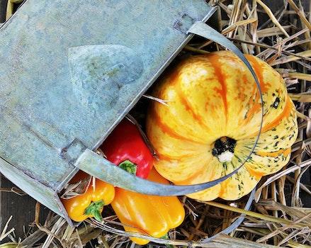 Free stock photo of food, healthy, vegetables, garden