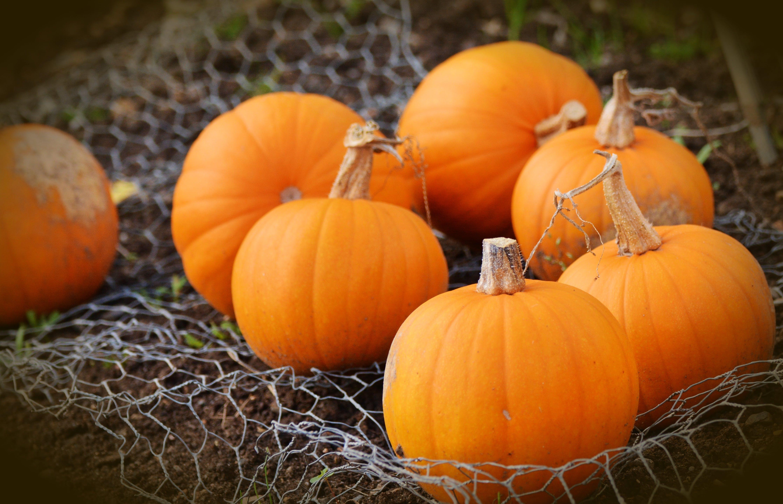 Orange Pumpkins on Hammock
