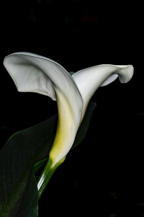 花, 花卉, 金針花 的 免費圖庫相片