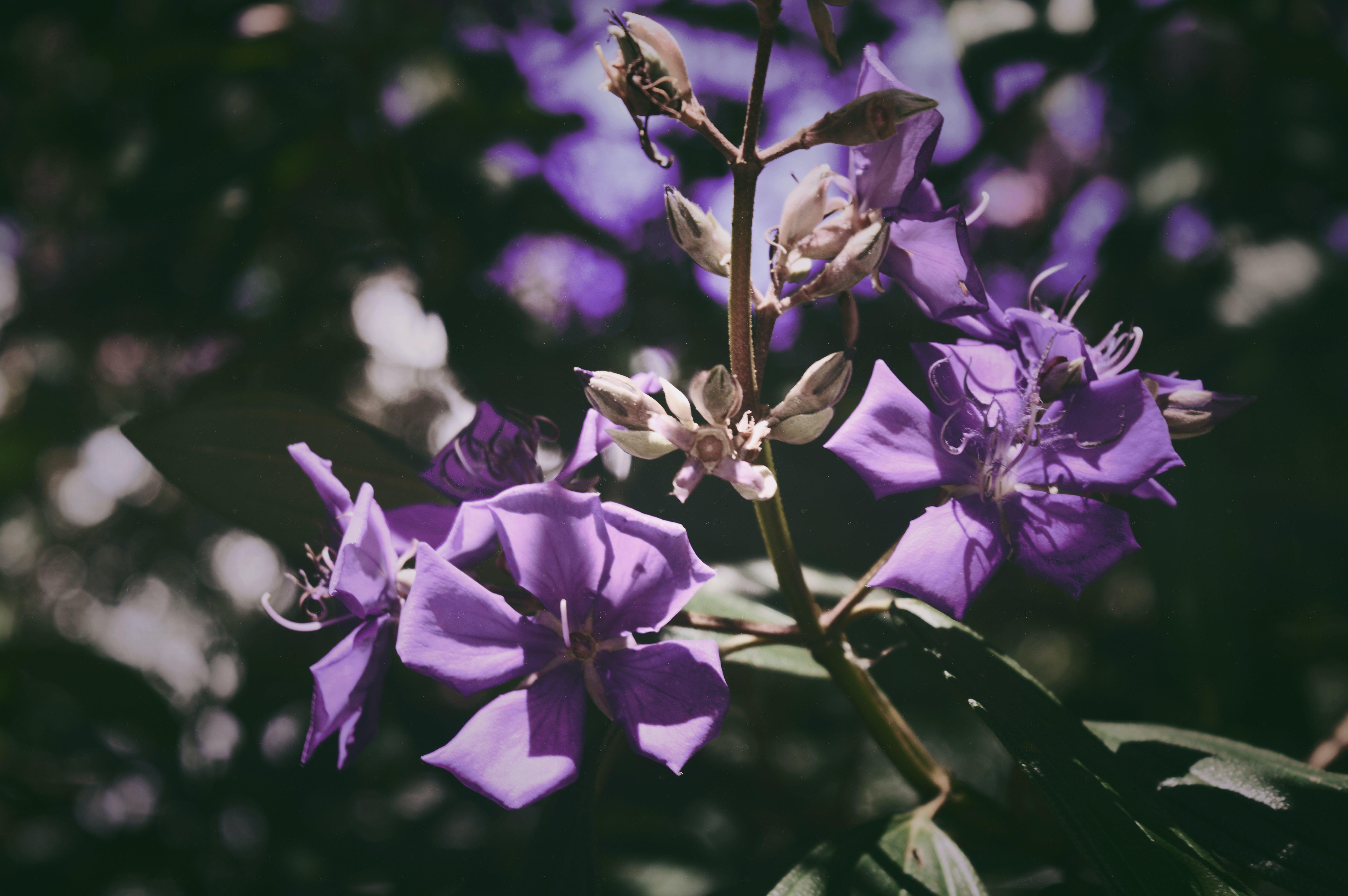 คลังภาพถ่ายฟรี ของ กลางวัน, กลางแจ้ง, กลีบดอก, การเจริญเติบโต