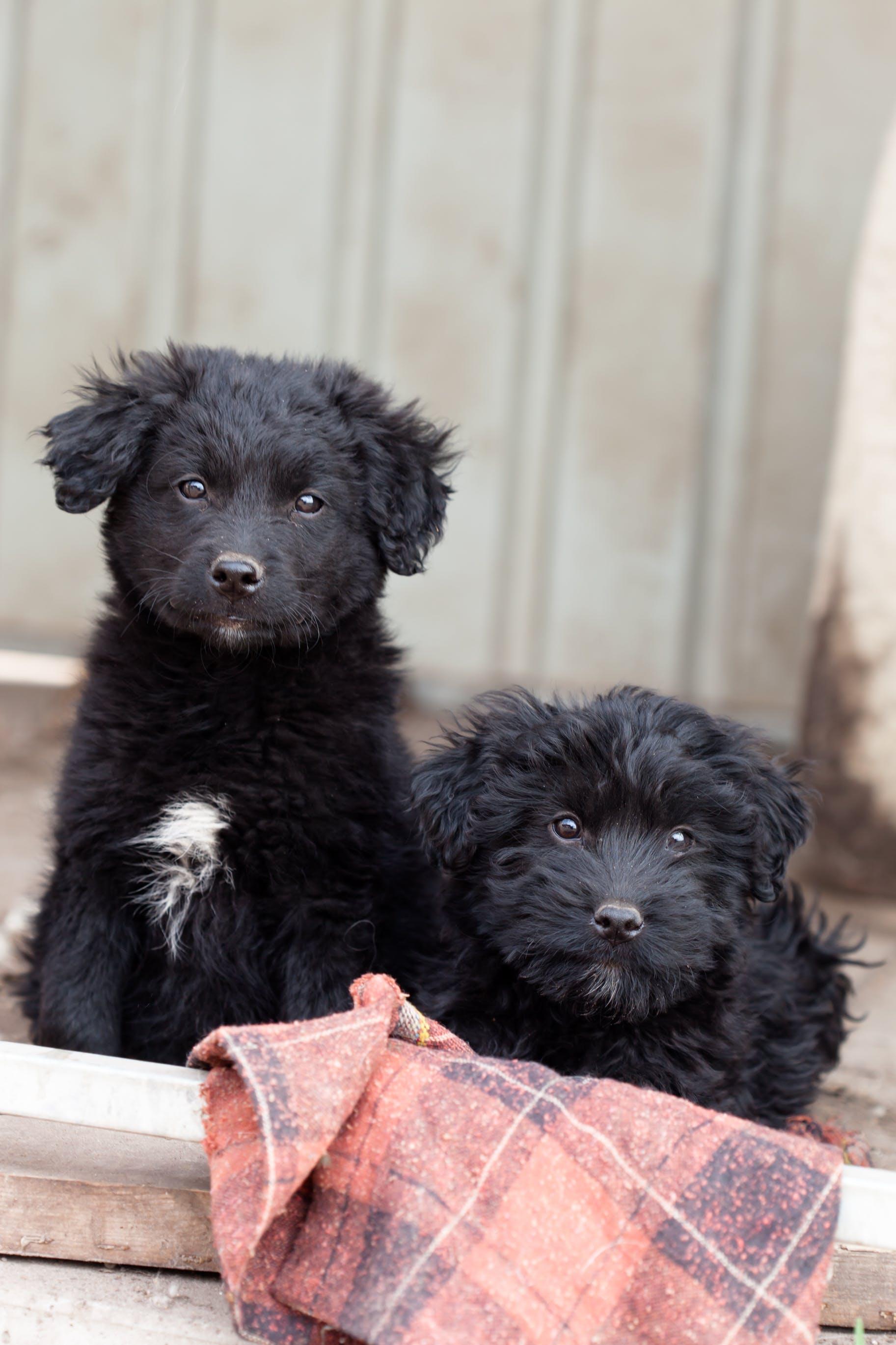 Foto profissional grátis de abrigo, animal vadio, cachorrinho, cachorro preto
