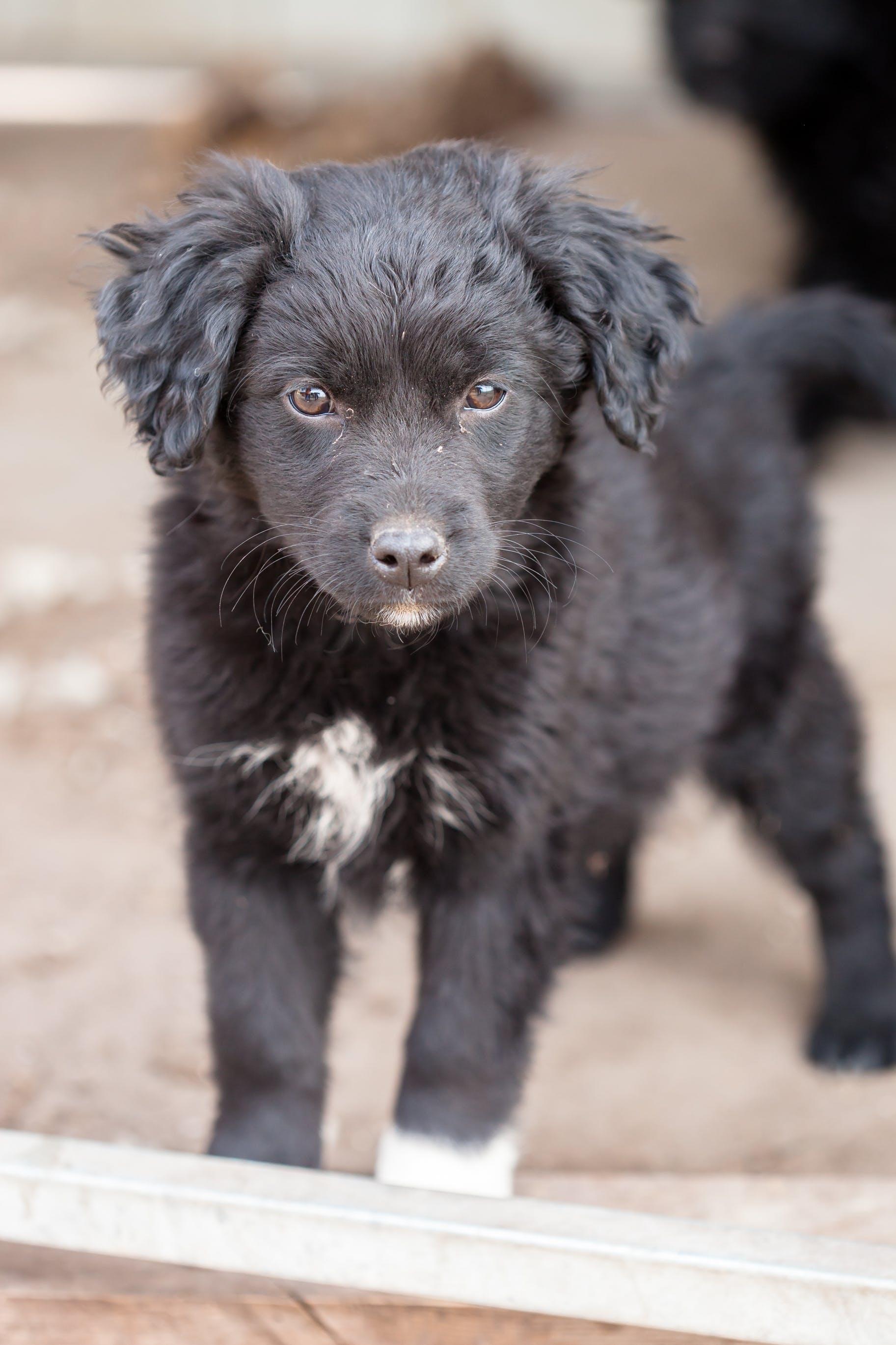 Foto profissional grátis de abrigo, cachorro, cachorro preto, cão vadio