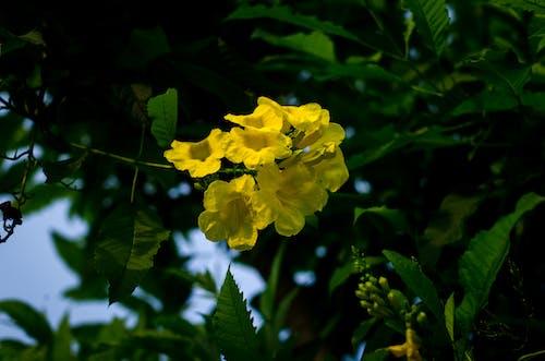 Gratis lagerfoto af årgang, baggrund, bane, blomst